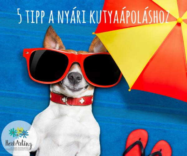 5 tipp a nyári kutyaápoláshoz szakértői cikk HerbArting