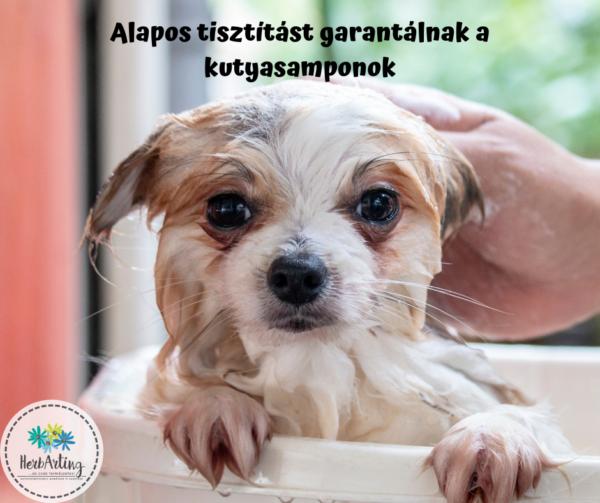 Alapos tisztítást garantálnak a kutyasamponok