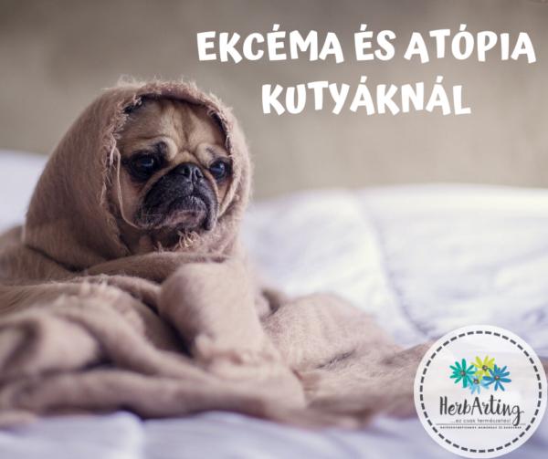 Ekcéma és atópia kutyáknál szakértői cikk HerbArting